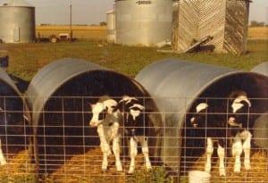Animal Shelter Calf Hut
