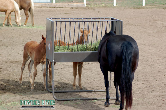 hay wall rack stall and feeders horse manufacturing feeder metalhayracks pasture neubauer