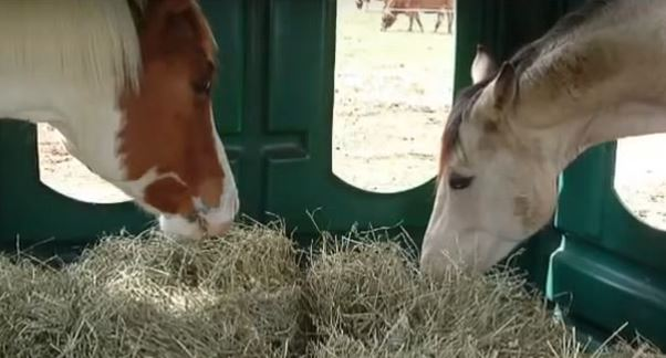 horses inside a covered hay feeder