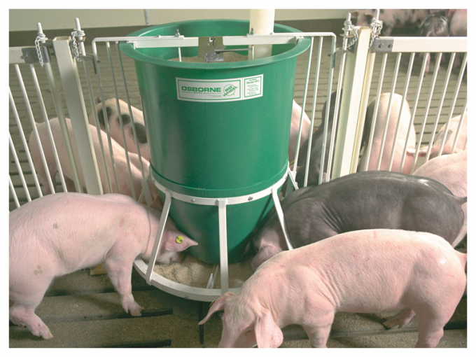 pigs eating from a pig feeder