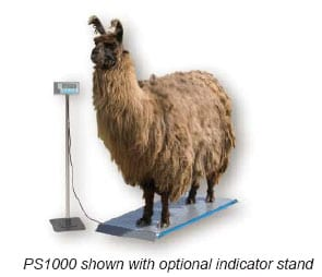 emu standing on an animal scale