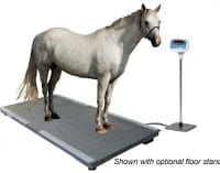 horse standing on a livestock scale